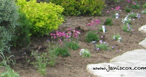 Bent Flowers