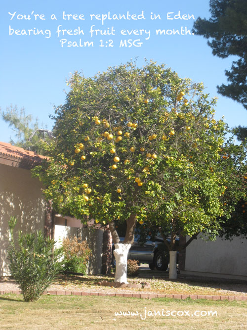 Grapefruit Tree - Psalm 1:2