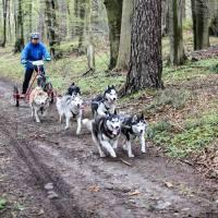 GRUPA JANISZ - Wyścigi psich zaprzęgów