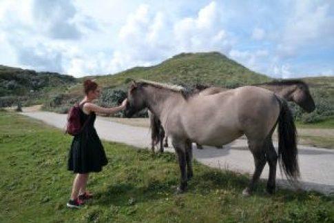 Zuid-Kennemerland paarden