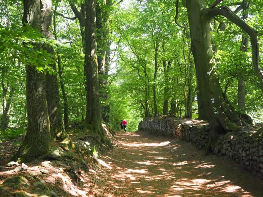 Wandern in Tecklenburg Teutoschleife