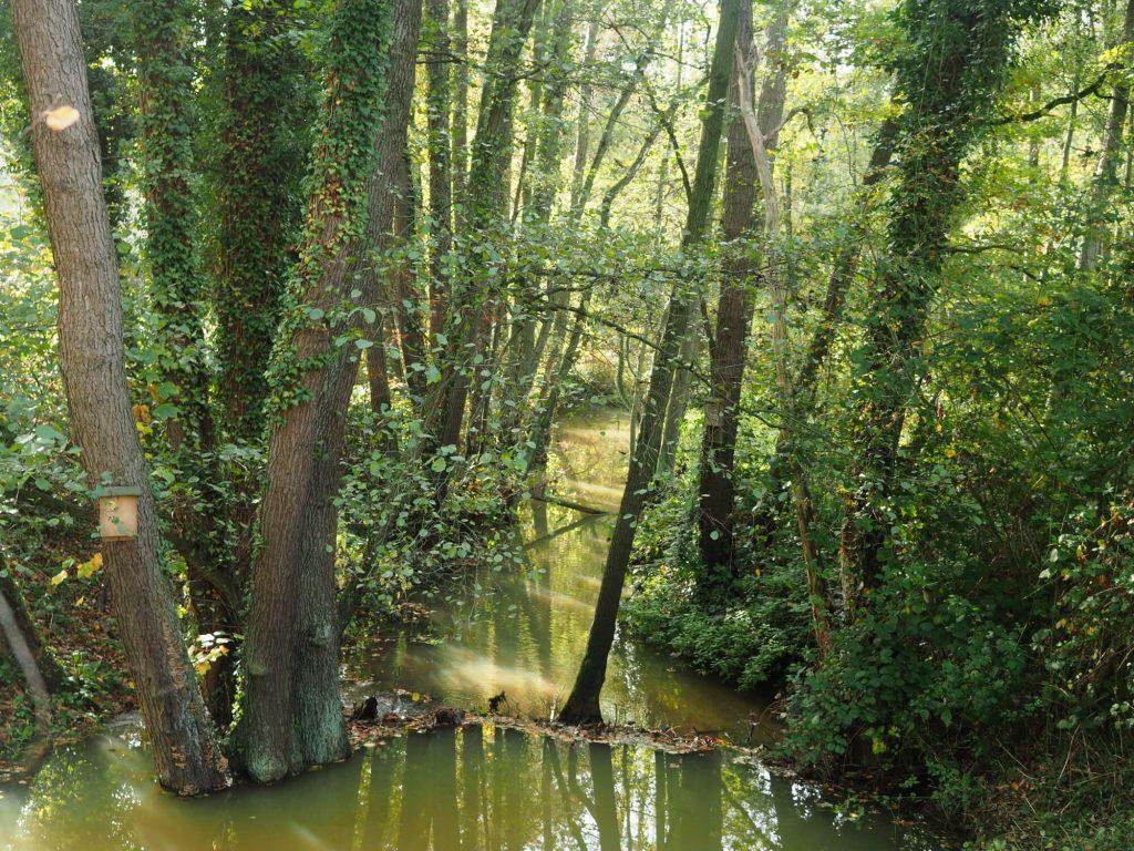 Wandelen in Midden-Limburg Drie Bekenroute