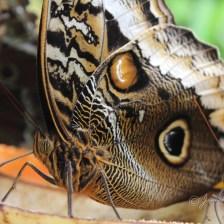 natuur_fotografie_foto_natuurfotografie_vlinder