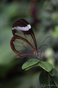 natuur_fotografie_foto_natuurfotografie_vlinder_2