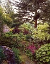 lush plants under mature trees