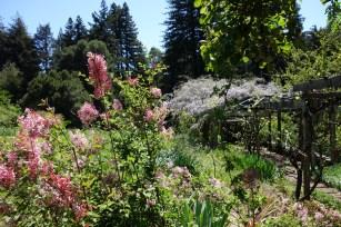 lilac_wisteria-arbor