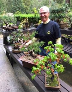Ed_bonsai-collection