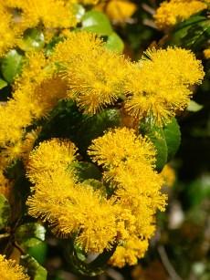 azara_denata-flowers