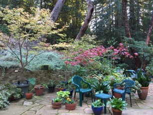fall_color_my_patio