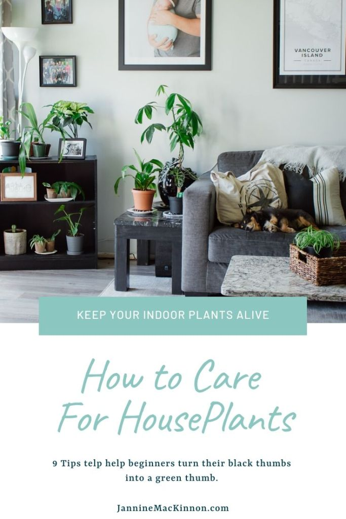 How to care for houseplants. Keep your indoor plants alive with these 9 tips for tending to your plants and making them thrive.