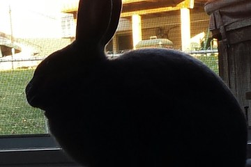 My rabbit Nathan, in silhouette
