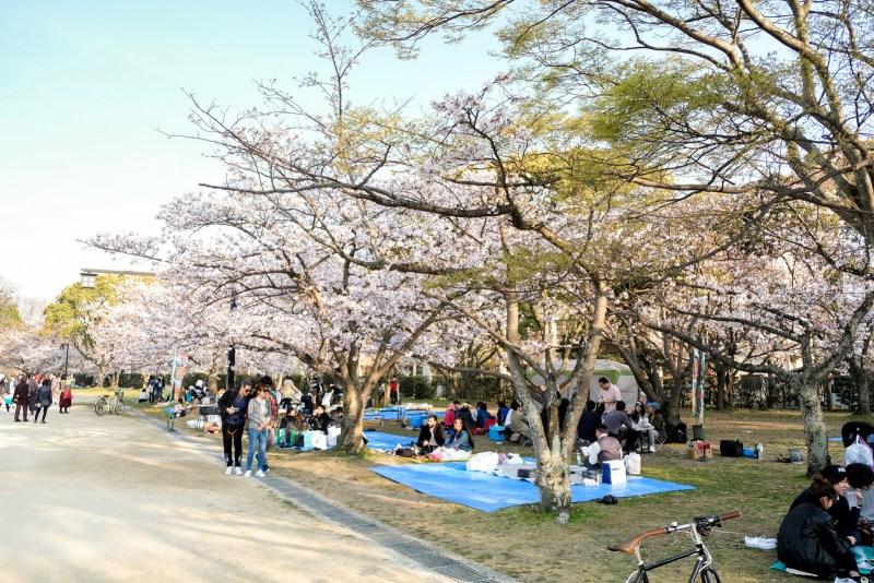 People having picnics at Hanami - Flower Viewing in Hakata, Fukuoka