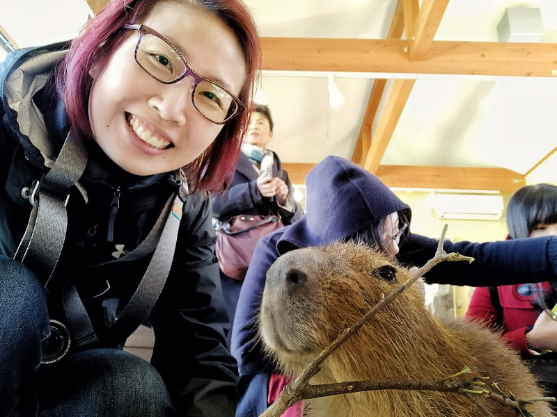 Meeting Capybara in Japan Izu Shaboten Zoo