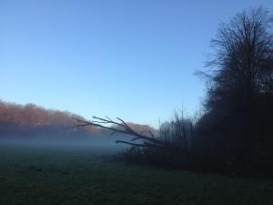 Amsterdamse Bos, zaterdagochtend 6 december 2014