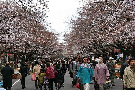 https://i2.wp.com/www.japan-guide.com/blog/g/sakura_090326_tokyo_04.jpg