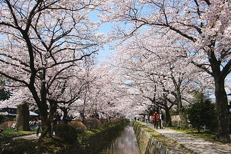 Philosophers Path, Kyoto