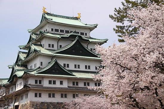 https://i2.wp.com/www.japan-guide.com/blog/sakura11/g/sakura11_110407_nagoya_01.jpg