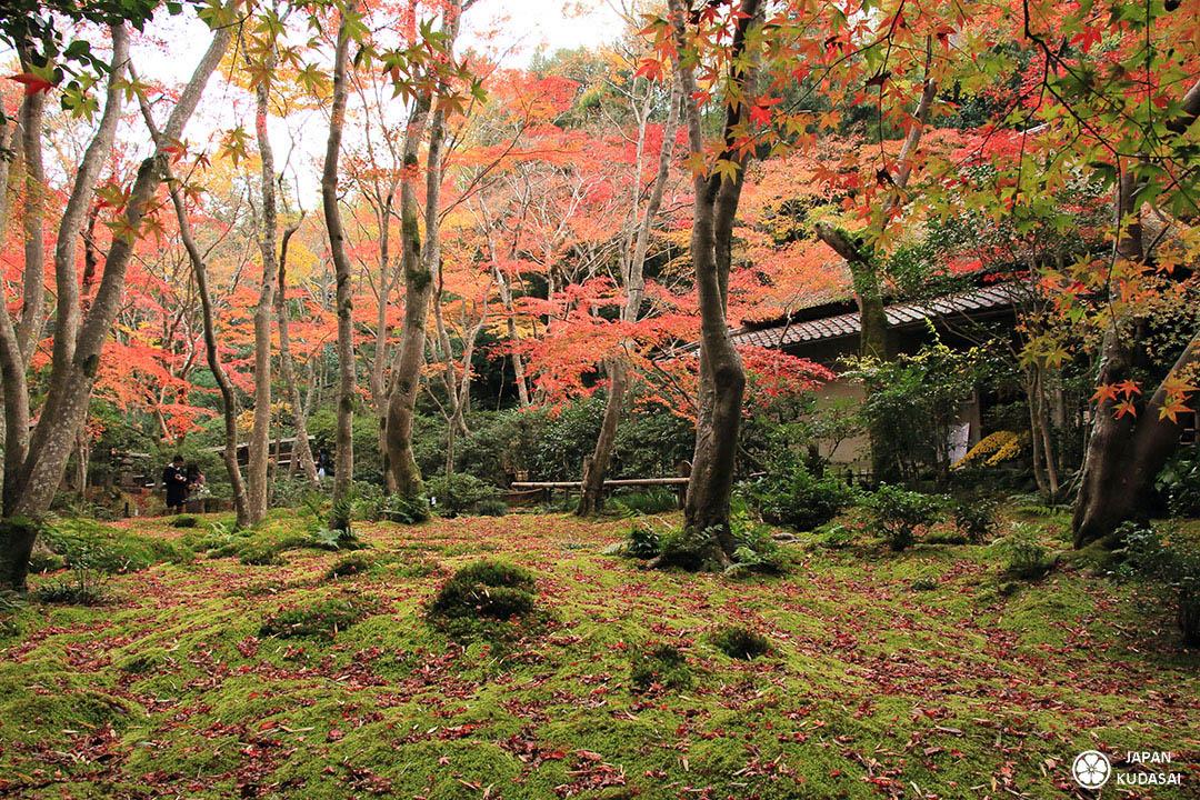 temple bouddhiste giou-ji kyoto automne
