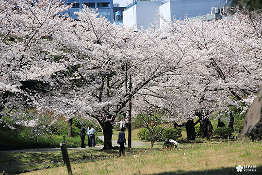 Jardin Kyu-Shiba-rykyu garden de Tokyo (11)