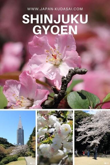 Sakuras au parc de Shinjuku gyoen - profiter des cerisiers japonais à Tokyo