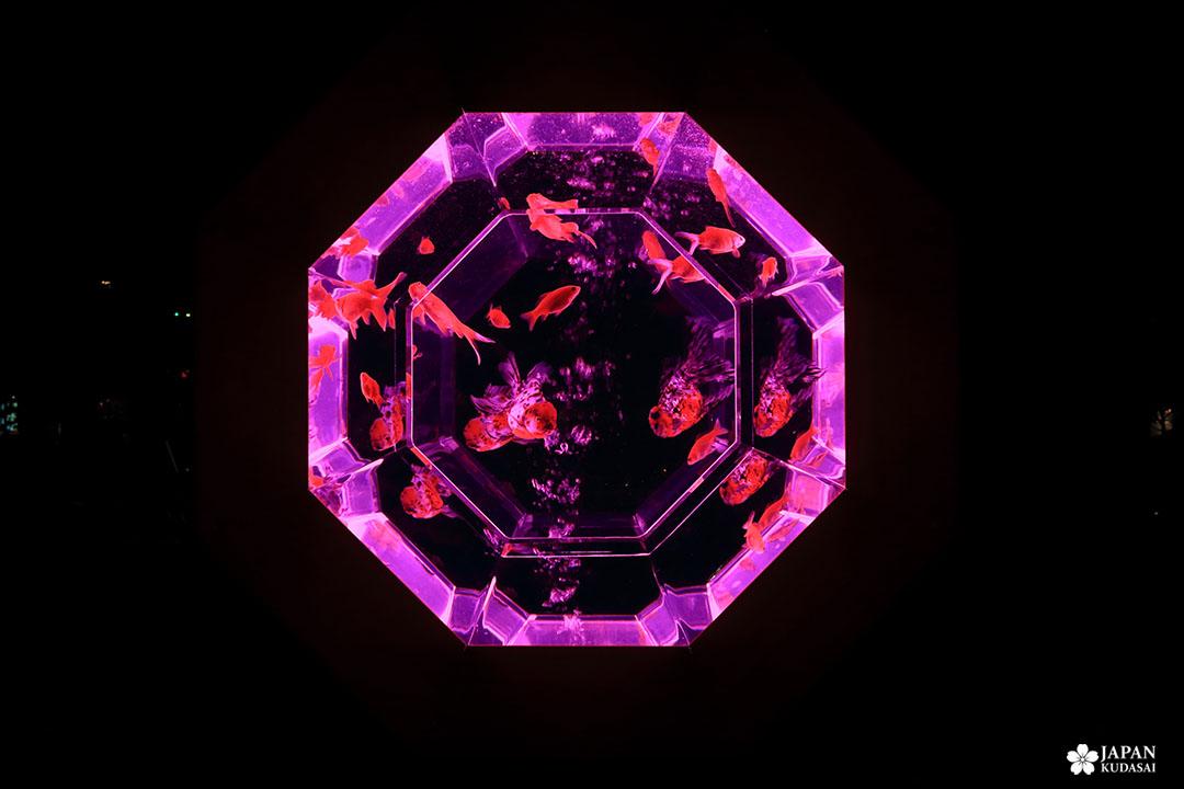 aquarium octogone lumineux rose