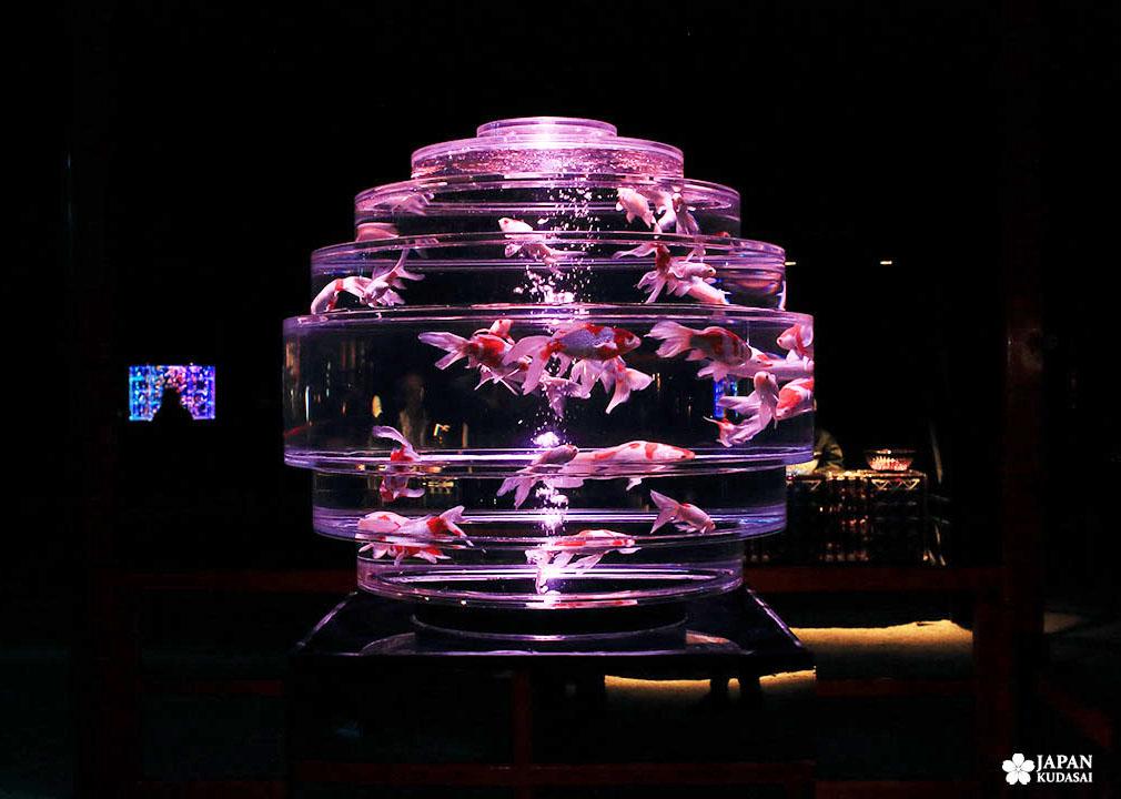 aquarium modele boule de verre sphérique