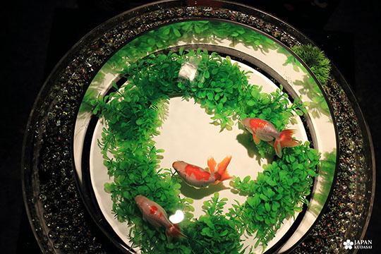 art-aquarium-kyoto-nijo (27)