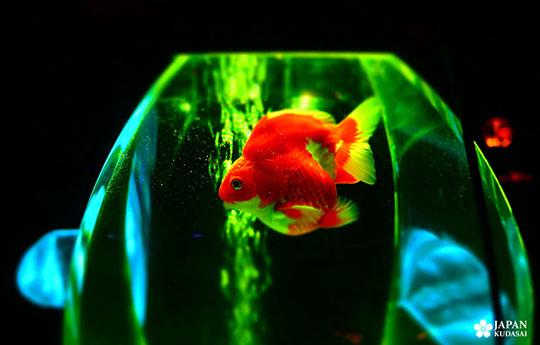 art-aquarium-kyoto-nijo (4)