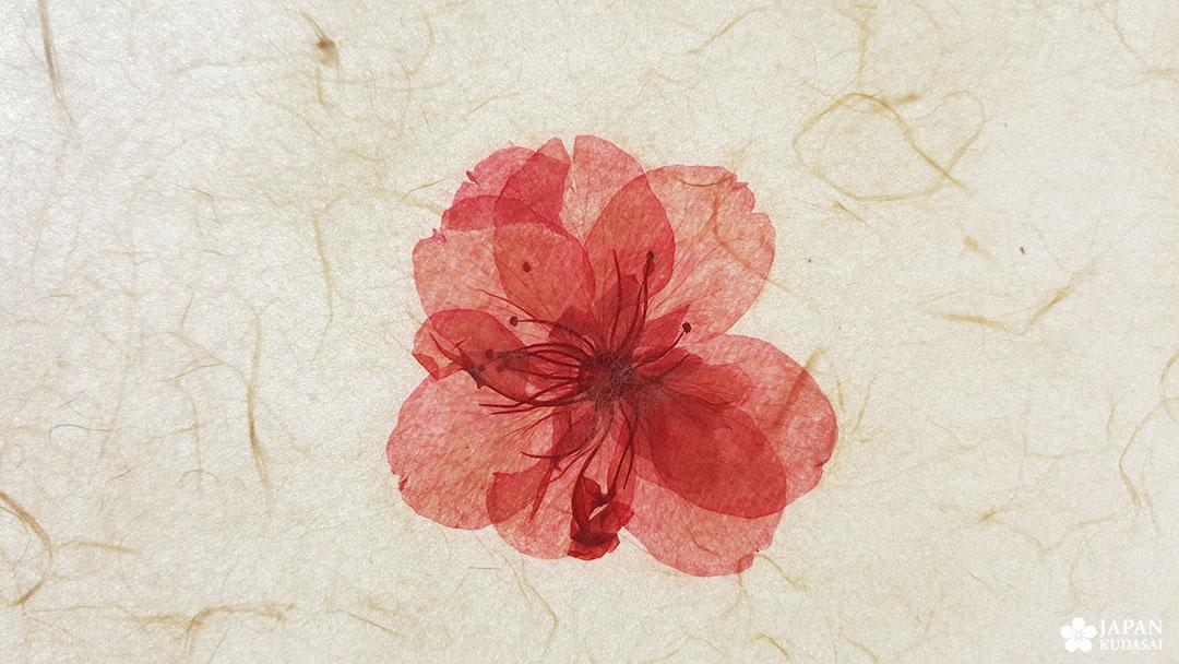 fleur incrustée dans papier