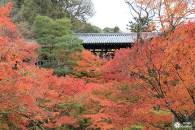 Tofukuji : la vallée d'érables de Kyoto
