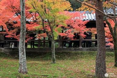 automne-kyoto-temple-tofukuji (22)