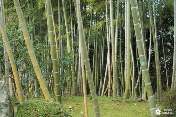 bambou-shokado-garden-04