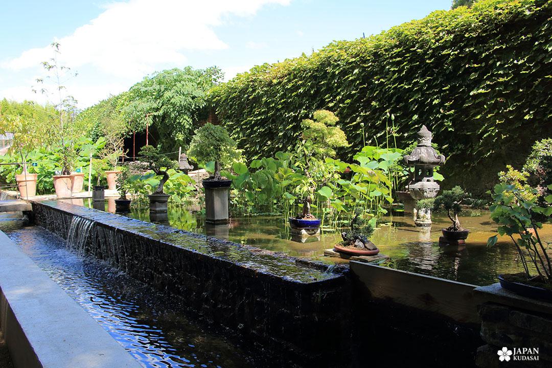 jardin des bonsais bambouseraie en cévennes