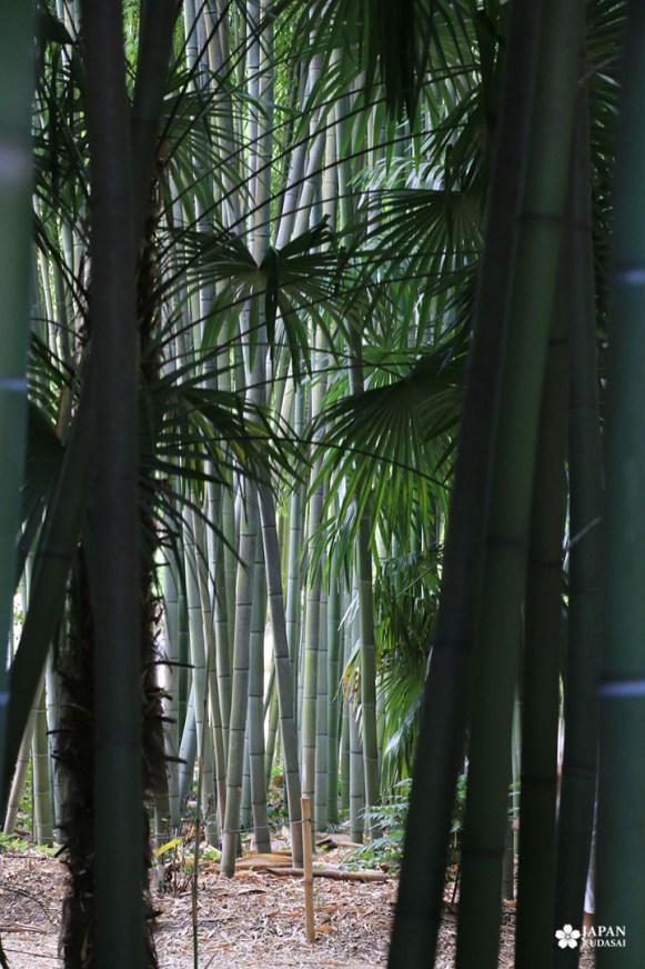 bambouseraie-en-cevennes (2)