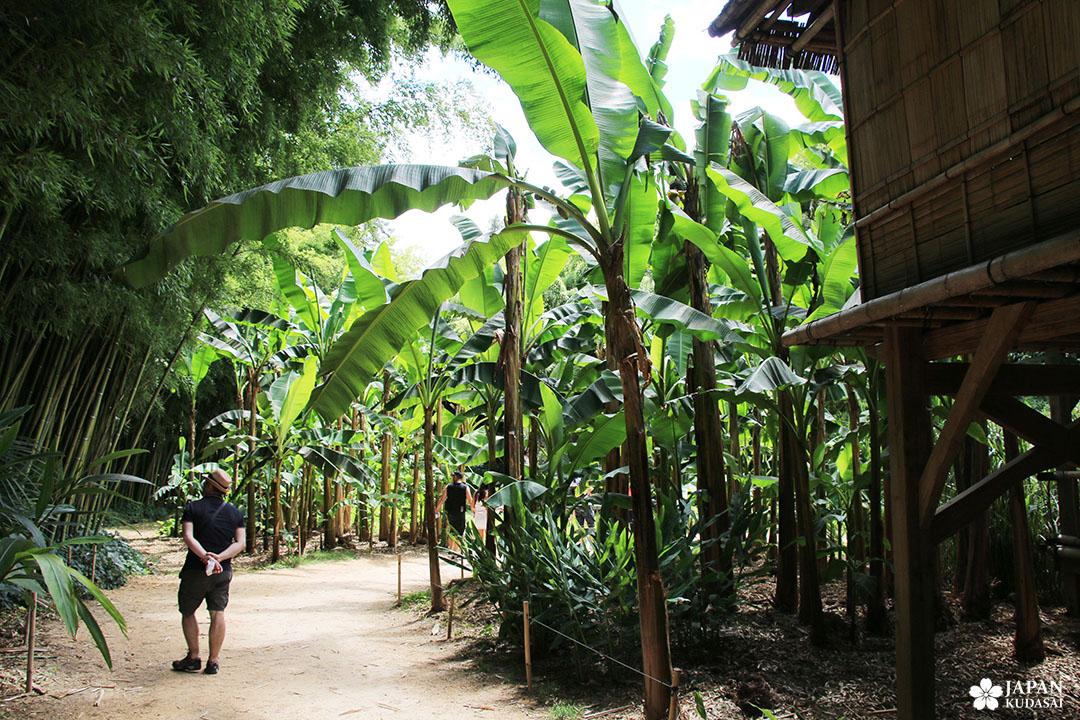 village laotien de la bambouseraie en cévennes