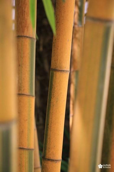 bambouseraie-en-cevennes (360)