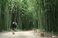 La bambouseraie en Cévennes, une immersion au Japon
