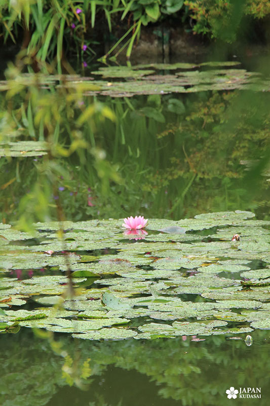 jardin-claude-monet-giverny (18)