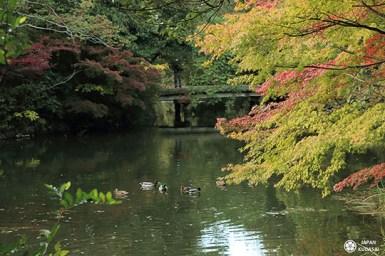 jardin-ritsurin-takamatsu (31)