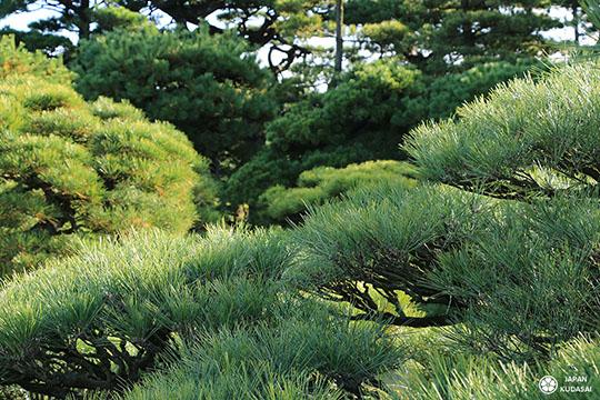 jardin-ritsurin-takamatsu (4)