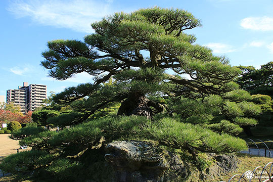 jardin-ritsurin-takamatsu (5)