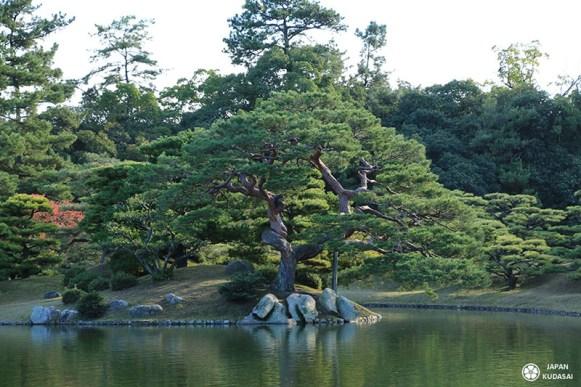 jardin-ritsurin-takamatsu (8)
