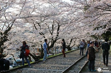 keage-incline-sakura-08