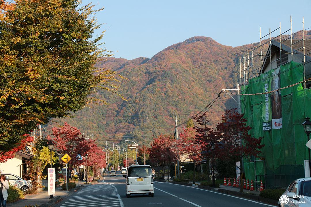 Erables japonais dans les alpes japonaises de la région de nagano