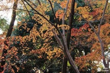 otokoyama-04