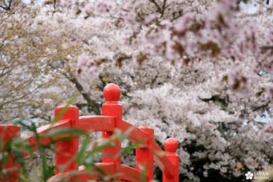 sakura-dijon-jardin-japonais (7)
