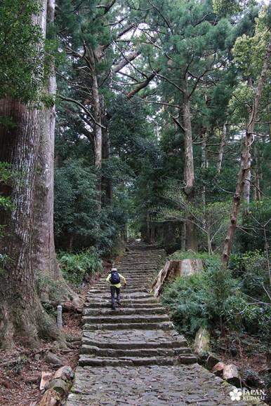 sentier de kumano kodo proche de nachi - japan kudasai