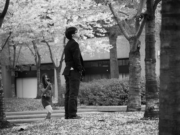 vancouver sakura
