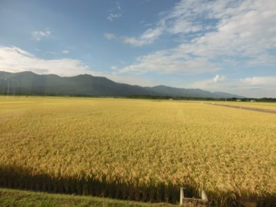 Rice field in Sado Island, Niigata, Japan