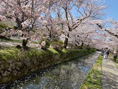 Philosopher's Path in Kyoto